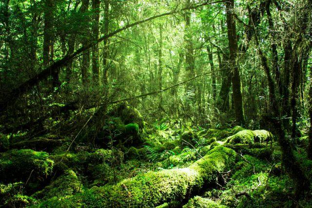 鬱蒼とした森の写真