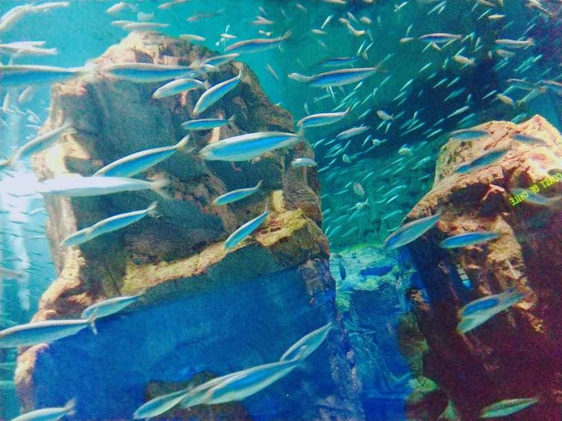 写真加工アプリで撮影した魚の写真